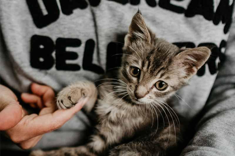 Bestes Katzenfutter für Kitten_Jungkatzen