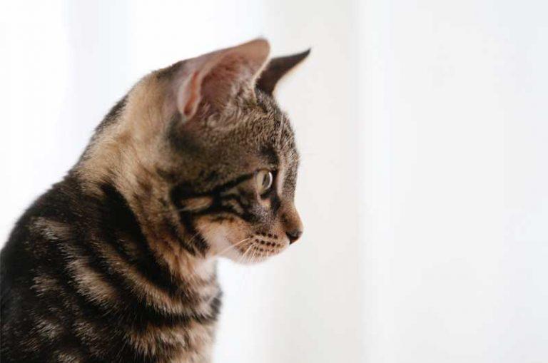 Fressverhalten- Wie viel soll meine Katze fressen_