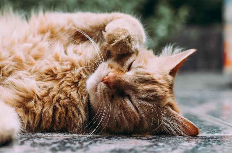 Tierische Nebenerzeugnisse Katzenfutter