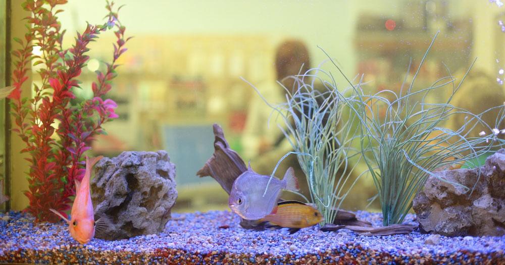 Aquarien neu einrichten – leicht gemacht