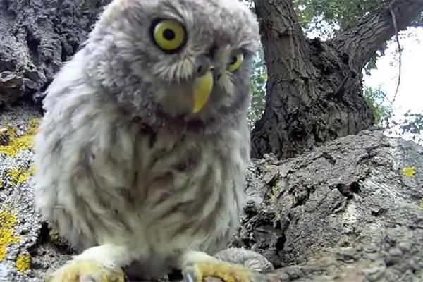 Diese Baby-Eulen entdecken eine Kamera vor ihrem Nest