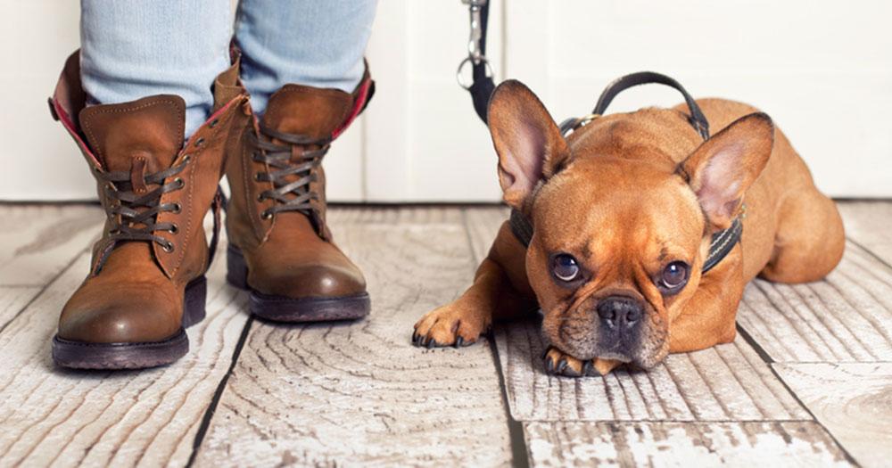 Brustgeschirr oder Halsband für den Hund?