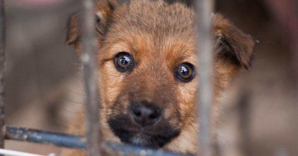 Hunde aus dem (Auslands-)Tierschutz