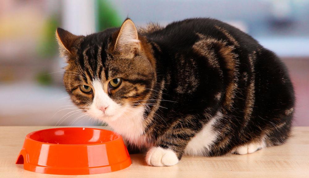 Ältere Katzen richtig ernähren
