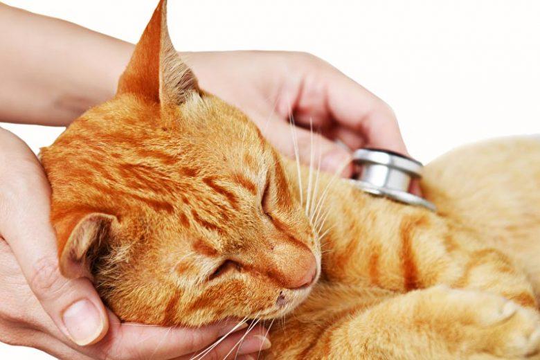 katze-tierarzt