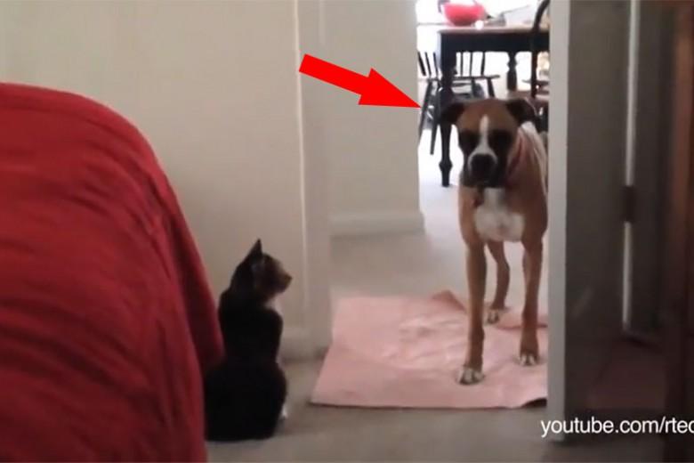 Gegen diese Türsteher haben Hunde einfach keine Chance.