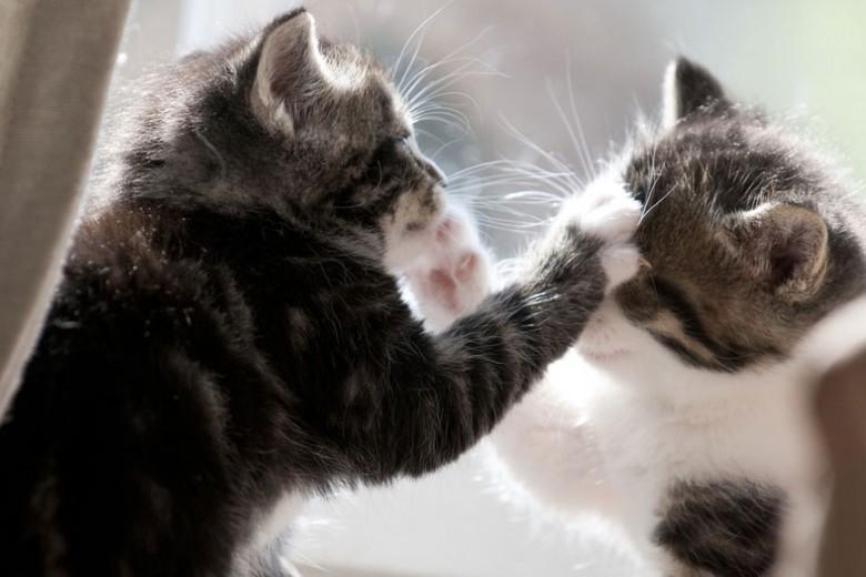 So vermeidest du Krieg im Mehrkatzenhaushalt