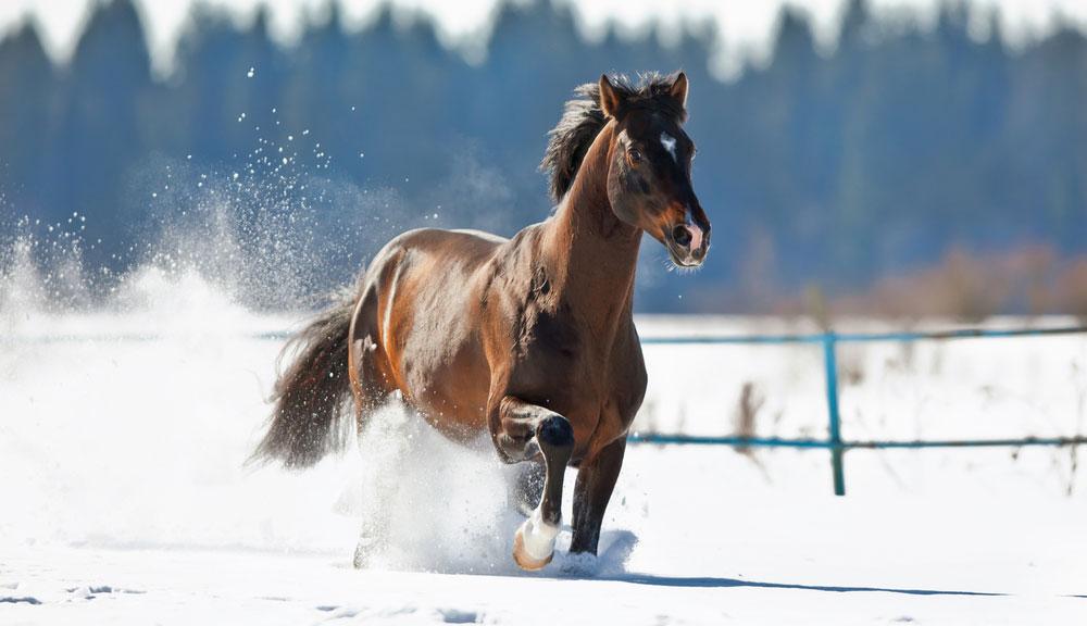 So kommt dein Pferd gut durch die kalte Jahreszeit