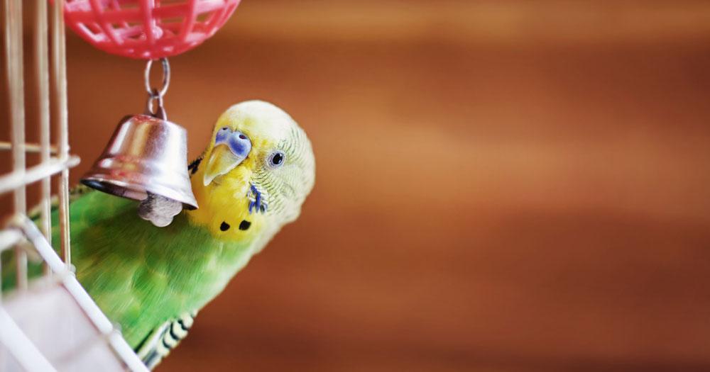 Ziervögel: 5 Dinge, die du beim Freiflug beachten solltest
